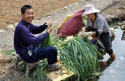Pengzhou, China: Fazendeiros que lavam Scallions imagens de stock royalty free