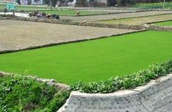 Pengzhou, China: Felder der grünen Grasscholle lizenzfreies stockfoto