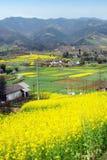 Pengzhou, China: Felder der Rapssamen-Blumen lizenzfreie stockfotos