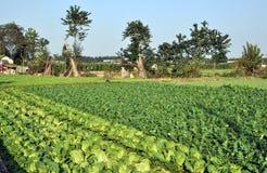 Pengzhou, China: Fields of Produce Royalty Free Stock Image