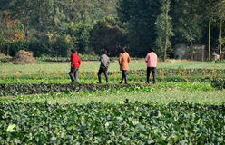 Pengzhou, China: Four Women Walking in Field. Four women walking along an earthen berm separating patches of vegetable crops including cabbages, garlic, and bok Royalty Free Stock Photo