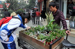 Pengzhou, China: Girl Buying Plant Stock Photography