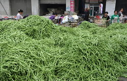 Pengzhou, China: Green Beans & Workers Royalty Free Stock Photography