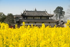 Pengzhou, China: Jing Tu Buddhist Temple. Rear facade of the countryside Jing Tu Buddhist temple sitting amidst fields of  yellow rapeseed oil flowers in Stock Photography