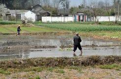 Pengzhou, China: Landbouwers die Rijst planten Stock Fotografie