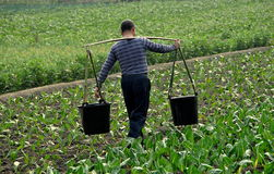 Pengzhou, China: Landwirt Carrying Water Buckets Stockbild