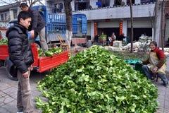 Pengzhou, China: Landwirte mit Bok Choy Lizenzfreies Stockbild