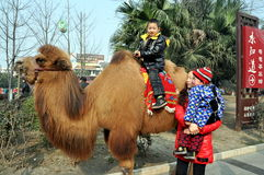 Pengzhou, China: Little Boy on Camel Royalty Free Stock Photography