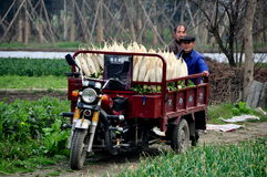 Pengzhou, China: Men with Cart Filled with Radishes Royalty Free Stock Photography
