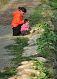 Pengzhou, China: Mother and Daughter with White Radishes. Mother and daughter sitting on the edge of road looking a row of freshly dug white Daikon radishes on a stock photos