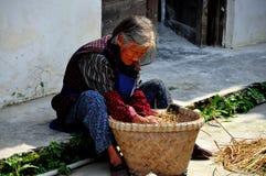 Pengzhou, China: Mujer mayor con las plantas medicinales Foto de archivo libre de regalías