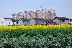 Pengzhou, China: Old Farms & Modern Apt. Buildings. Fields of broad beans, yellow rapeseed oil flowers, and old farmhouses stand in sharp contrast to distant Stock Image