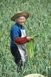 Pengzhou, China: Old Woman Holding Garlic Stock Photos