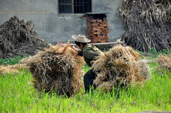 Pengzhou, China: Old Woman Lifting Dried Bales Royalty Free Stock Image