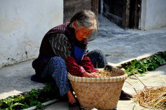 Pengzhou, China: Old Woman with Medicinal Plants Royalty Free Stock Photo