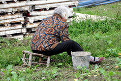 Pengzhou, China: Old Woman Weeding Stock Photo