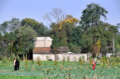 Pengzhou, China: Pastorale Farm Scene Royalty Free Stock Image