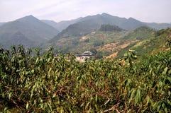 Pengzhou, China: Pflaume-Obstgarten und Berge Lizenzfreie Stockfotografie
