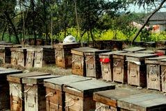 Pengzhou, China: Rectángulos de la colmena de la abeja Imagen de archivo