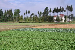 Pengzhou, China:  Sichuan Farmlands Royalty Free Stock Photography