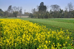 Pengzhou, China: Sichuan Province Farm Royalty Free Stock Images