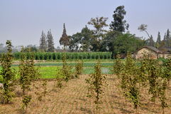Pengzhou, China: Sichuan Province Farm Stock Image