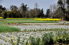 Pengzhou, China: Sichuan Province Farmlands Stock Images