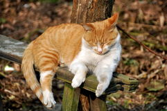Pengzhou, China: Sleeping Cat Royalty Free Stock Images