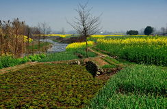 Pengzhou, China: Spring Farmlands & River Stock Images