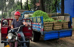 Pengzhou, China: Truck Filled with Green Beans Stock Images