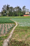 Pengzhou, China: Winding Farm Pathway Royalty Free Stock Photo