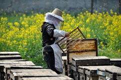 Pengzhou, China: Woman Beekeeper Stock Images