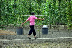 Pengzhou, China: Woman Carrying Pails. Woman carries two large pails filled with earth suspended from a bamboo pole Royalty Free Stock Image