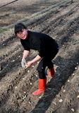 Pengzhou, China: Woman Planting Potatoes Stock Photos