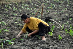 Pengzhou, China: Woman Planting Seedlings Royalty Free Stock Photo
