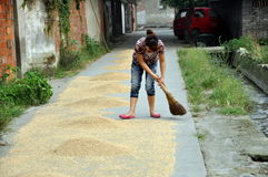 Pengzhou, China: Woman Sweeping Rice Grains Stock Image