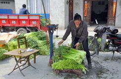 Pengzhou, China: Woman Weighing Garlic Greens Royalty Free Stock Photos