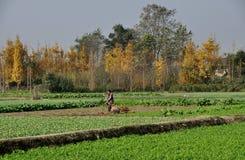 Pengzhou, China: Woman Working Field Stock Photos