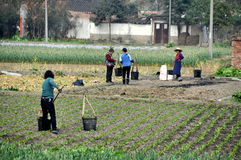 Pengzhou, China: Women Farmers in Field Stock Images