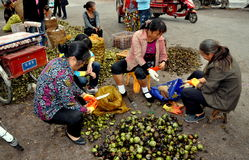 Pengzhou, China: Women Shelling Fresh Walnuts Royalty Free Stock Photo