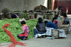 Pengzhou, China: Women Sorting Green Beans Stock Photography