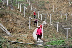 Pengzhou, China: Women at Vineyard. Three women carrying hoes at work cultivating soil in early Spring as they descend a winding cement pathway through a Stock Images