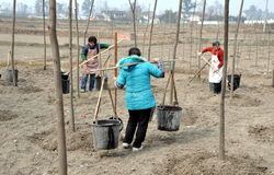 Pengzhou, China: Women Watering Trees Royalty Free Stock Image