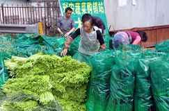 Pengzhou, China: Workers at Farm Co-op Stock Image