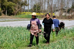 Pengzhou, China: Workers in Garlic Field Royalty Free Stock Image