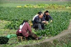 Pengzhou, Chine : Famille de ferme fonctionnant dans le domaine Photographie stock libre de droits