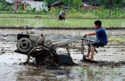 Pengzhou, Chine : Fermier labourant la rizière Image libre de droits