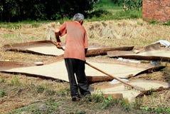 Pengzhou, Chine : Fermier ratissant des textures de riz Images libres de droits