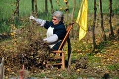 Pengzhou, Chine : Wooman assortissant les usines sèches Photographie stock