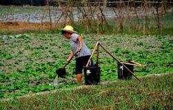 Pengzhou, Chiny: Średniorolny podlewanie produkt spożywczy Zdjęcie Stock